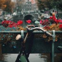 תובנות של ישראלית בהולנד - חלק 3